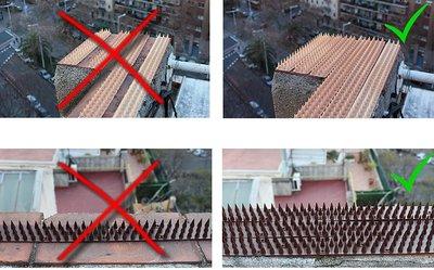 El control de aves y de roedores en Cataluña